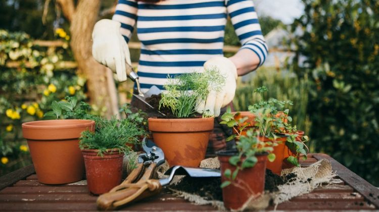 Eco-Friendly Household Tips for Summer